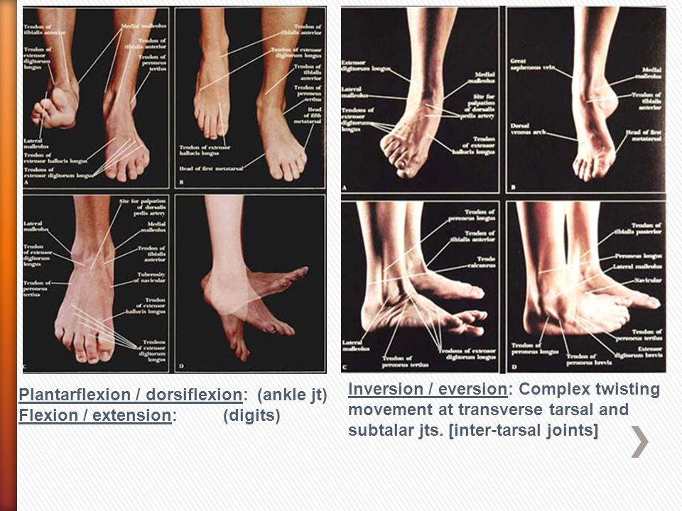 Inversion / eversion: Complex twisting movement at transverse tarsal and subtalar jts. [inter-tarsal joints]